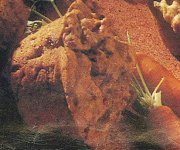 Muffins aux carottes et au blé